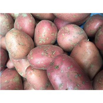 Rooster Potatoes - New Season