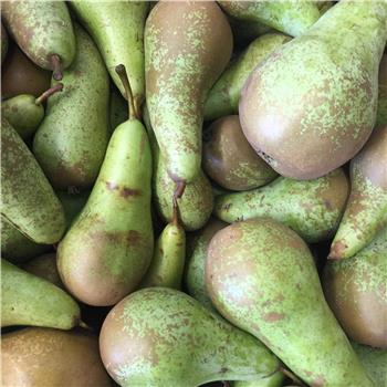 Armagh Conference Pears